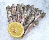 Black Sea red mullet on ice. In the window of the restaurant Royalty Free Stock Photos