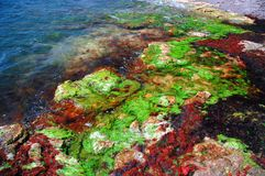 Black sea shore in colors #4 Stock Image