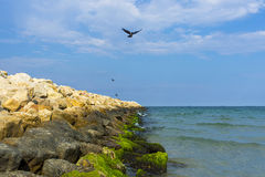 Black sea shore in Romania. Black sea in Constanta, Romania royalty free stock image