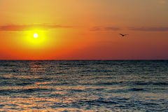 Black Sea sunrise. Sunrise at seaside with sun and birds in the morning Royalty Free Stock Photos