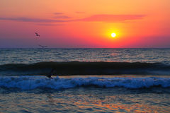 Black Sea sunrise. Sunrise at seaside with sun, waves and birds in the morning Stock Image