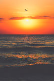 Black Sea sunrise. Sunrise at seaside with sun, waves and birds in the morning Royalty Free Stock Image