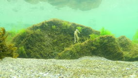 Black Sea Underwater. On Shallow Seabed stock video footage