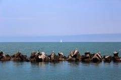 Black Sea, yacht, fiskmåsar och kormoran Arkivbild