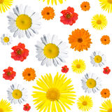 Black seamless floral pattern Royalty Free Stock Photos