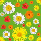 Black seamless floral pattern Stock Images
