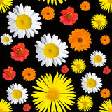 Black seamless floral pattern Stock Photo