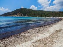 Black seaweed on the beach Stock Image