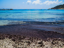 Black seaweed on the beach Royalty Free Stock Images