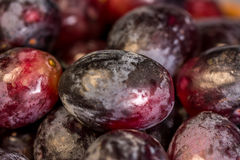 Black Seedless Table Grapes Royalty Free Stock Images