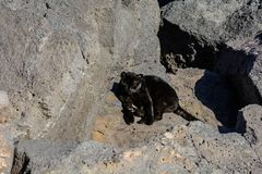 Black serious cat on black volcanic stones royalty free stock photos