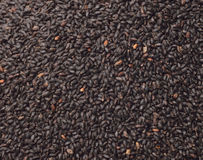 Black sesame seed, cereal, food agriculture background Royalty Free Stock Photo