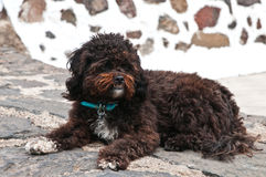 Black shaggy dog lying at the street Royalty Free Stock Photography
