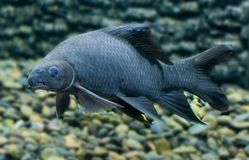 Fish Species Saltwater Classification Isolated Stock Image ...