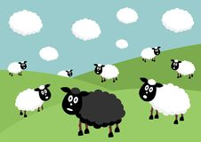 Black sheep. Flock of sheep with the black sheep of the family Stock Images