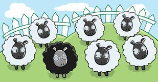 Black Sheep. A black sheep and white sheep in a field Royalty Free Stock Photos