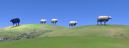 Black sheep - 3D render Royalty Free Stock Photo