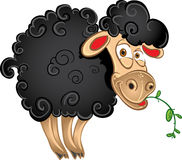 Black sheep with blade of grass Royalty Free Stock Photo