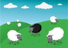 Black sheep of the family Stock Photo