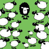 Black sheep of the family. One black sheep amongst lots of white ones Royalty Free Stock Images