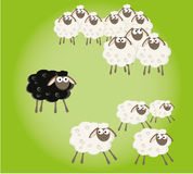 Black sheep in the family Royalty Free Stock Photography