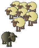 Black Sheep and Flock. A black sheep being shunned from the rest of the flock for being different Stock Photo