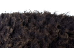 Black sheep fur Stock Image