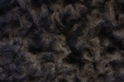 Black sheep fur Royalty Free Stock Photo