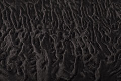 Black sheep fur pattern Royalty Free Stock Images