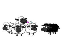 Black sheep and group of white sheep Stock Photo