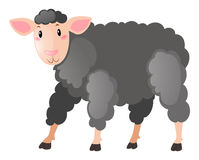 Black sheep with happy face Stock Image