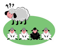 Free Black Sheep In The Family Royalty Free Stock Photography - 61040847