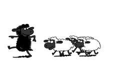Black Sheep Leading White Sheep Royalty Free Stock Photos