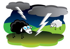 Black sheep with lightning storm Stock Images