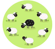 Black sheep is lonely in the middle of white sheep. Stylized  illustration of sheep family. The black sheep is different. This sheep is outsider and standing Stock Images