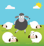 Black Sheep with make a difference Royalty Free Stock Photography