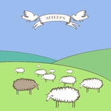 The black sheep. Vector picture with banner, birds and sheep Royalty Free Stock Photos