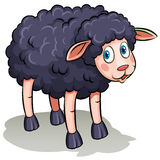 A black sheep Stock Photography