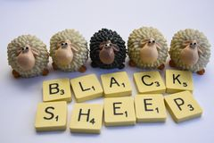 Black sheep among white sheep stock photography