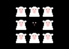 Black sheep and white sheep Stock Image