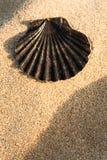 Black Shell. Single black seashell over sand Royalty Free Stock Photos