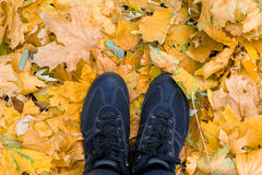 Black shoes on a background of autumn leaves.  Royalty Free Stock Photo
