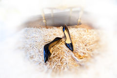 Black shoes on carpet Stock Photos