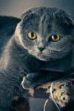 Black Short Coated Cat on Table Stock Photo