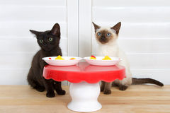 Black and siamese kitten at small table Stock Photo