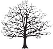 Black silhouette bare tree . Vector illustration. Black silhouette of a bare tree . Vector illustration