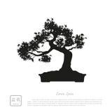 Black silhouette of a bonsai on a white background. Detailed ima Stock Photo