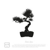 Black silhouette of a bonsai on a white background. Detailed ima Royalty Free Stock Photos