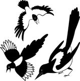 The black silhouette of a crow. Raven. Rook. Magpie. Tattoo. The black silhouette of a crow. silhouette birds. Raven or Rook. Magpie Royalty Free Stock Images