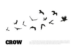 Black silhouette of a crow on a white background. Raven isolated. Vector illustration Stock Photos
